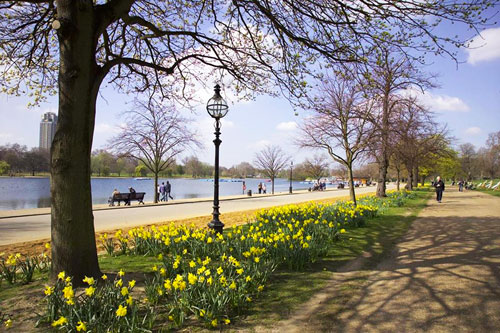 The trees in Hyde Park have an amenity asset value of £173 million, a new report shows.