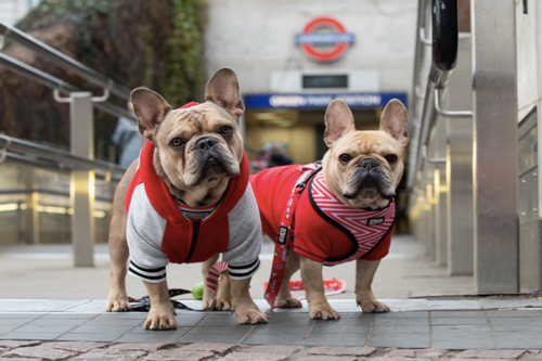first London Dog Week launches